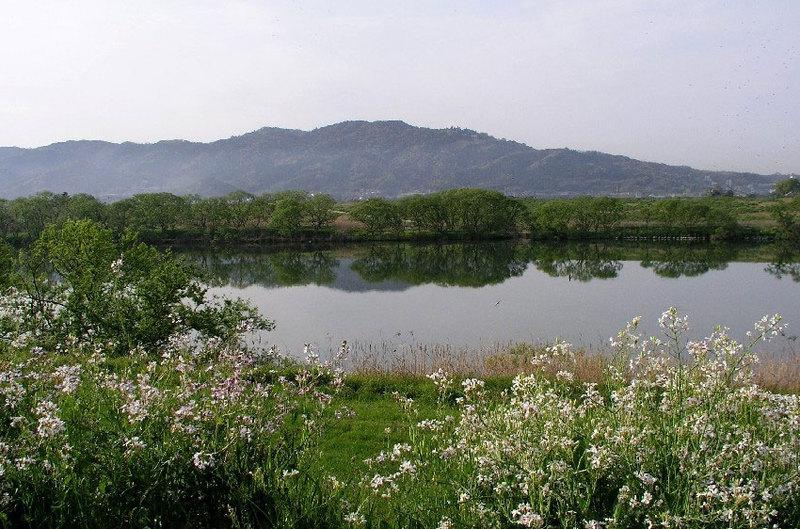 筑後川から高良山