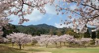 フジカントリー桜祭り