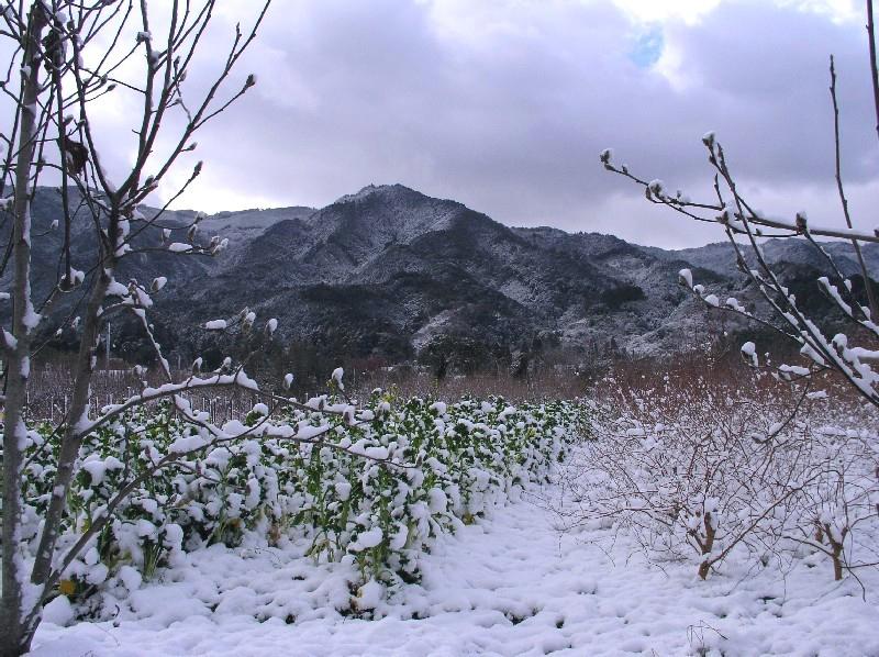 耳納山雪景色