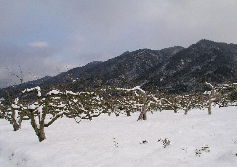 柿畑から耳納連山