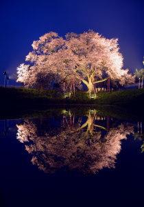 福岡を代表する一本桜  浅井の一本桜