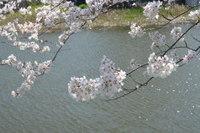 満開 と 桜(チェリー)×アイアン脚テーブル&ベンチ完成!