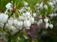 珍しいかわいいお花2種