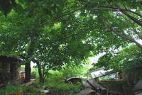 MorinoOkurimono の 小さな森