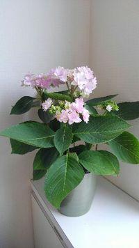 可愛い花!