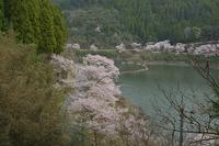 満開 千本桜!