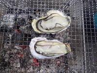 豊前の牡蠣は最高!