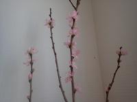 診療室は春!