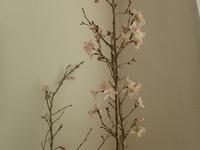今日は桜の花!