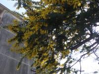 黄色の可憐な花!