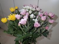 八女の花、頂きました!