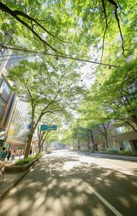 初夏の入学キャンペーン開催中! ~ 博多駅前の福岡道学院