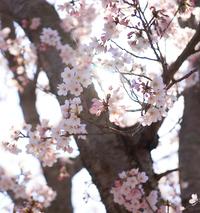 春の入学キャンペーン 実施中! ~ 気のトレーニング・福岡道学院