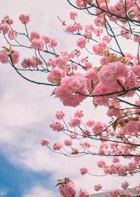 春は効果が出やすい季節 ~ 気のトレーニング