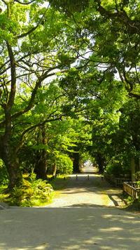 観世音寺と並木道