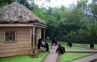 ウガンダでゴリラに会おう!その⑥