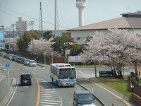 目達原桜開放