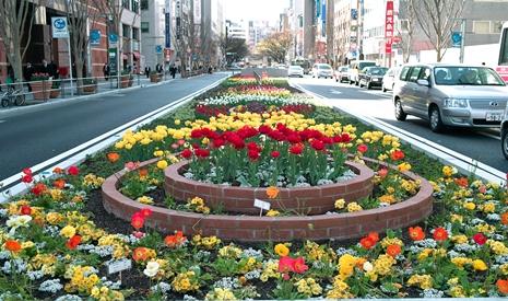 日本道観 福岡<道>学院 チューリップ