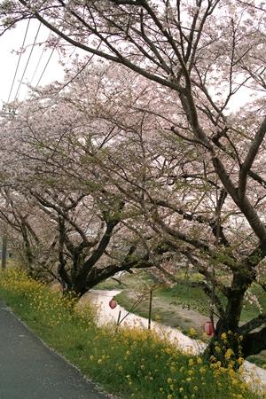 日本道観 福岡<道>学院 朝倉の杷木