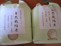 古代黒米を刈る