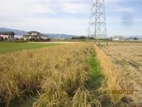 北田とコンバイン