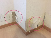 ネズミが壁に穴を開けてしまった時の補修
