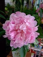 お花で和むo(^ ∇^o)(o^∇ ^)o