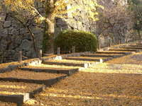 舞鶴公園 黄色い石畳