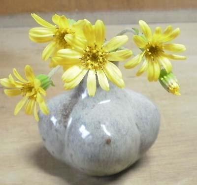 石蕗(つわぶき)の花