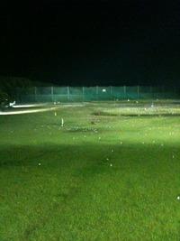 ゴルフ練習場に現れた狸