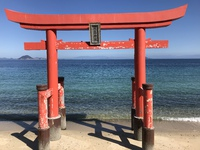 河津桜と青い海とリセト
