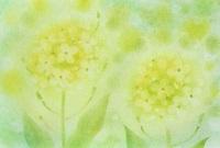 3月のパステルアート 菜の花2