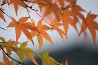 Cyta.jp:福岡市西区の写真講座・教室