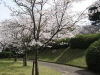 桜 開花情報一覧