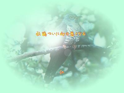 フォト575『 杜鵑ついに幻の恋となる 』zbv2201tq21