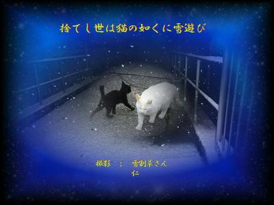 フォト575zk1501『 捨てし世は猫の如くに雪遊び 』sk15