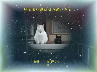 フォト575zk1602『 降る雪や遊び心の迷いをる 』sk16