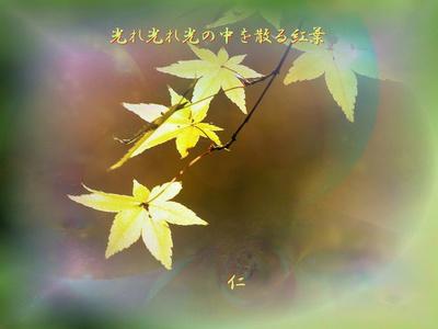 フォト575zm2503『 光れ光れ光の中を散る紅葉 』sm25