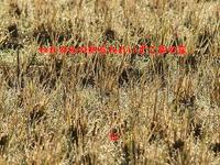 『 われのみの知るわれいずこ草の露 』めぐり逢い良寛さん