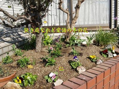 フォト575『 狭き庭なれど愛語の冬の花 』zbk0202tk15