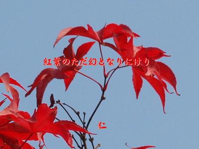 フォト575『 紅葉のただ幻となりにけり 』zbk0403tk16