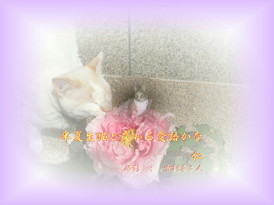 フォト575『 半夏生猫と交わる愛語かな 』zs0201st28