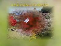 『 四季咲きの桜小ぶりに露けしや 』めぐり逢い良寛さんzp1701sp17
