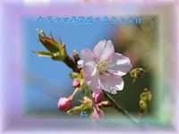 『 初花や四年経過の生きもうけ 』物真似575春qx2805