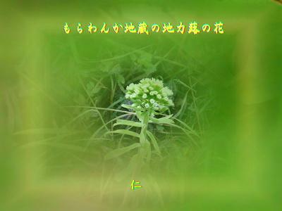 『 もらわんか地蔵の地力蕗の花 』物真似575春zrw0303
