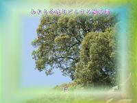 『 われも今魂おどらする楠若葉 』物真似575春zrw2105