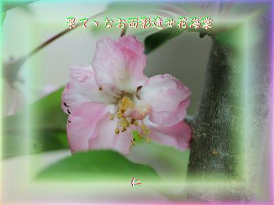 『 果てゝなお面影遺せ花海棠 』物真似575春zrw2904