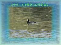 フォト575『 はがゆくも不都合はOFF水温む 』zrx0802