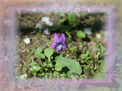 フォト575『 映さんか昔を今に野の菫 』zrx1108