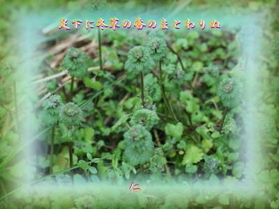フォト575『 足下に冬草の香のまとわりぬ 』zry0105